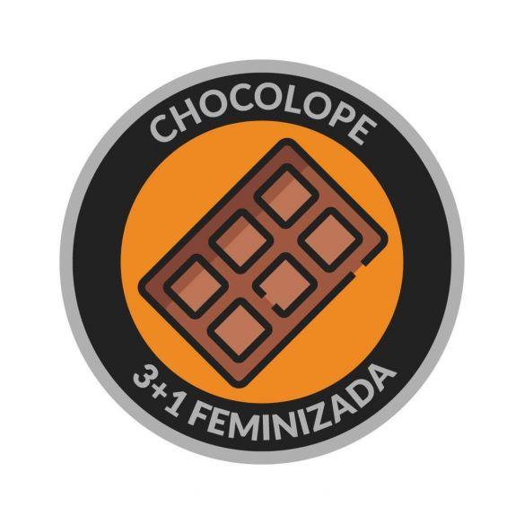 Reserva Privada Tío Astro Chocolope Fem X3+1