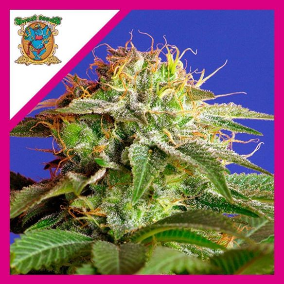 Sweet Seeds Green Poison F1 X3+1