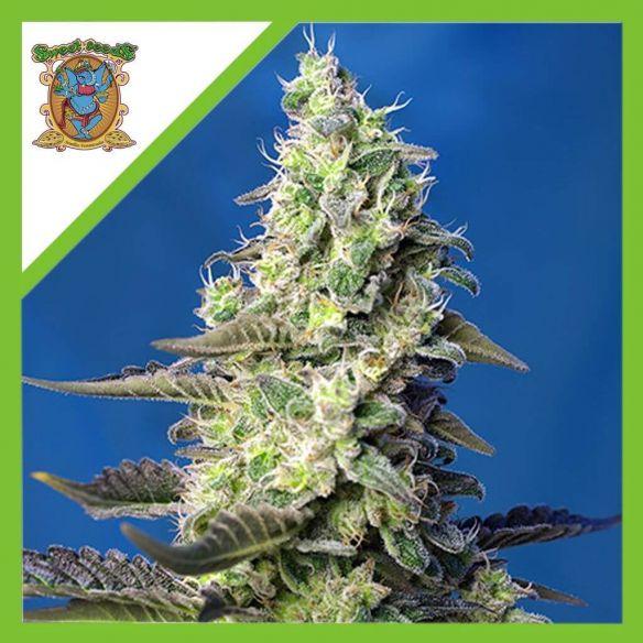 Sweet Seeds Green Poison XL Auto X3+1