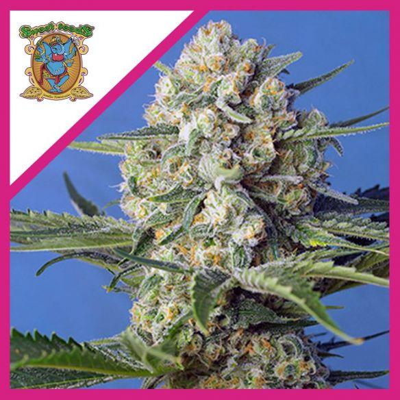 Sweet Seeds Crystal Candy Fem F1 X3+1