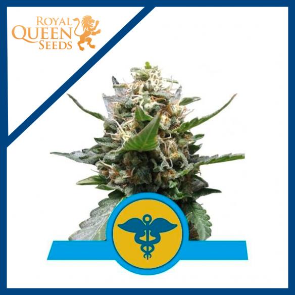 Royal Queen Seeds Royal Medic Fem CBD X3