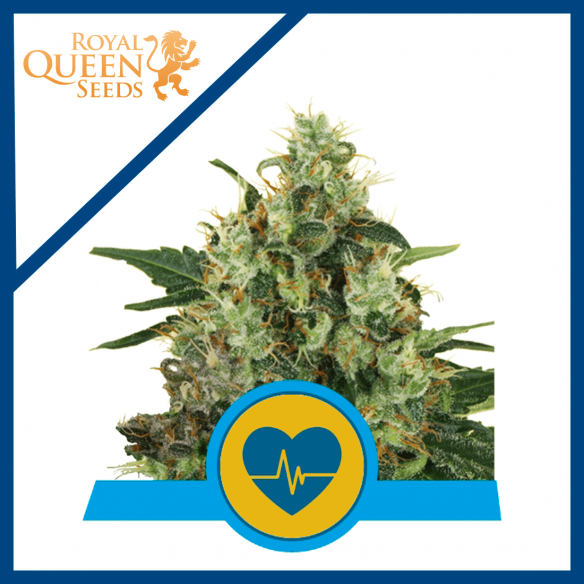 Royal Queen Seeds Royal Medical Mass CBD Fem X3