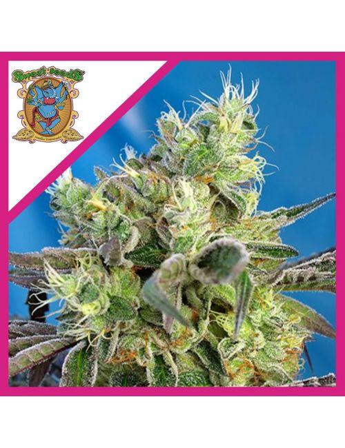 Sweet Seeds Do-Sweet-Dos Fem X 3+1