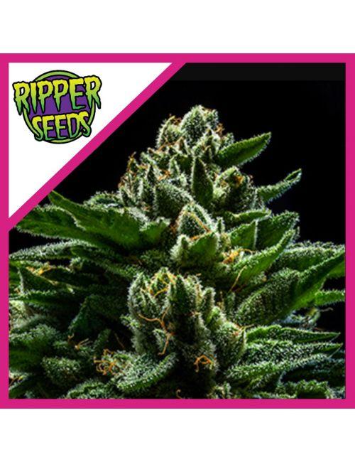 RIPPER SEEDS DO-G FEM X3