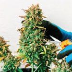 como cosechar tus plantas