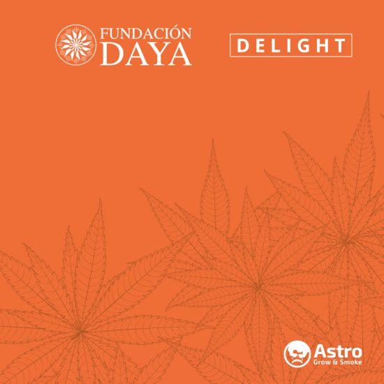 cultivo y consumo de cannabis medicinal