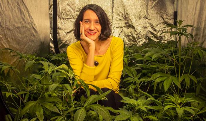 cultivar marihuana