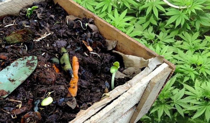 fertilizante casero